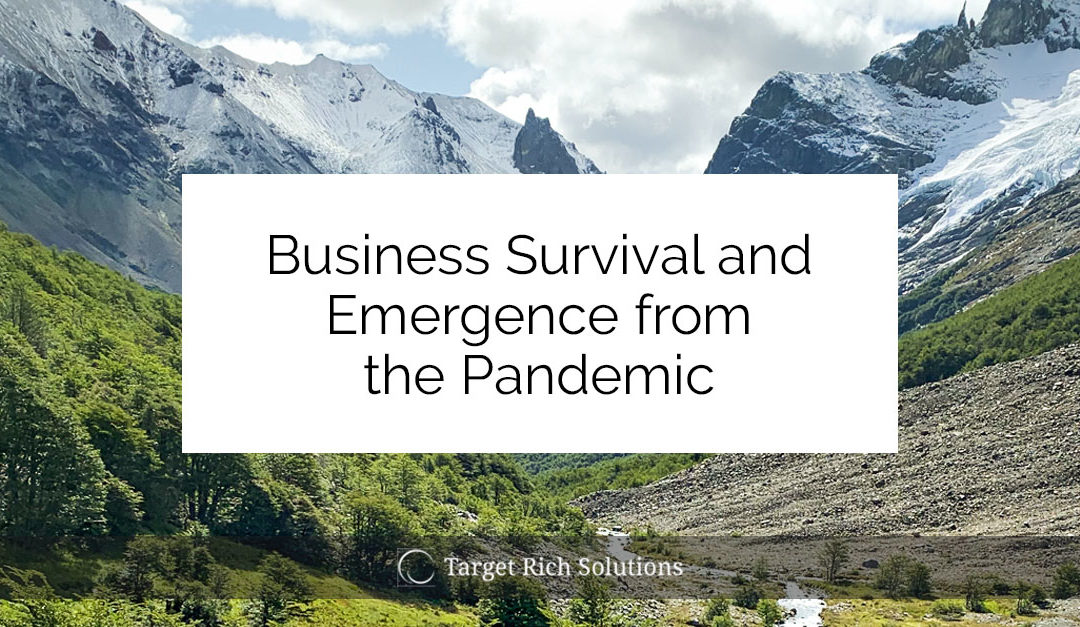 Business Survival and Emergence from the Pandemic